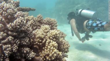 Coral bleaching, Great Barrier Reef