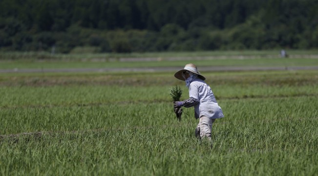 Fukushima rice sold to Britain june 20 2016.jpg