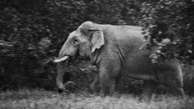 A wild elephant in Chhattisgarh (Subrata Biswas)
