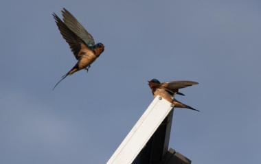 Birds on a solar module  (Author: Don McCullough, CC BY-SA 2.0 Generic)