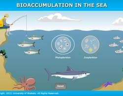 Bioaccumulation_in_the_sea