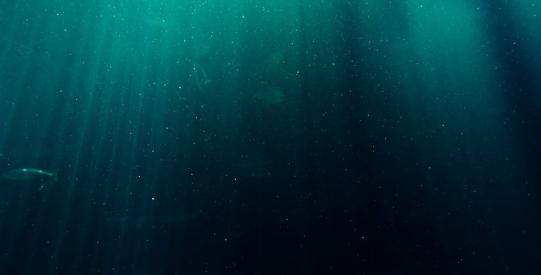 fuku-ocean-test-slider-pexels.png
